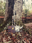 Tactical trophies with rifle and Bushnell scope.