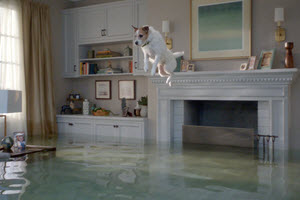 Small dog mid-air above flooded living room