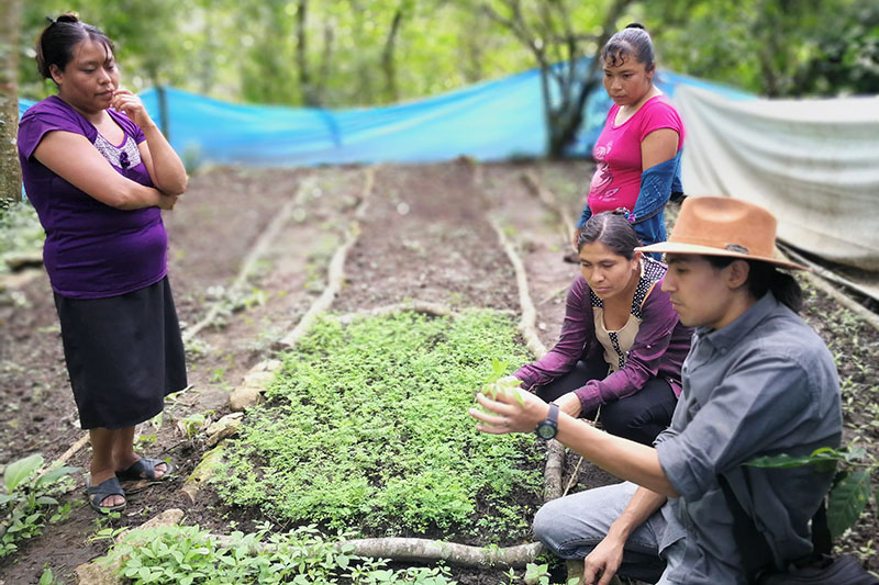 PayPal is investing in reforestation projects in Mexico